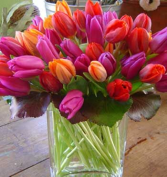 spring tulips  administrative day