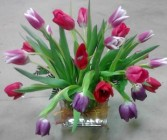 Spring Tulips Fresh floral