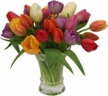 Spring Welcome Mixed Tulip Vase