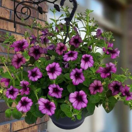 Spring/Summer Hanging Baskets  Blooming Plants