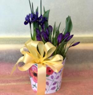 Springtime Joy Assorted Bulb Plant Garden in Mattapoisett, MA | Blossoms Flower Shop