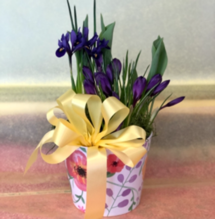 Springtime Joy Assorted Bulb Plant Garden