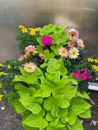 Square flower planter