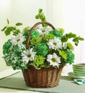 St. Patrick's Day Flower Basket EF84