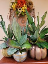 Staghorn fern faux pumpkins permanent botanical