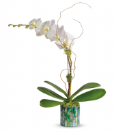 Stained Glass Orchid All-Around Floral Arrangement