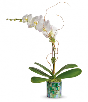 Stained Glass Orchid All-Around Floral Arrangement in Winnipeg, MB | KINGS FLORIST LTD