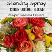 Standing Spray-Citrus