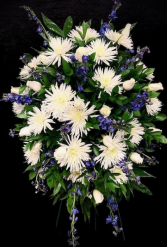 Stars in the Sky White Spiders designed with blue Delphiniums