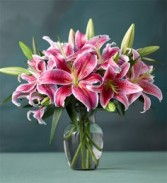 Star Lilies Eye-catching 'Mero Star'