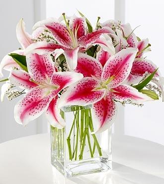 Stargaiser Lilies Has Her Seeing Stars