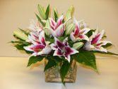 Stargazer Cube Floral Arrangement