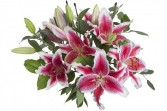 Pink Lilies Wrapped Bouquet