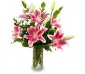 Stargazer Lily Bouquets everyday