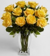 Stellar Yellow roses