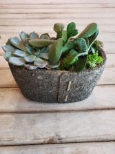 Stitch pot Succulents plant