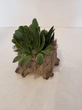 Stone Stump Succulent planter