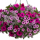 "Boost of Energy -- 12"" Hanging Basket"