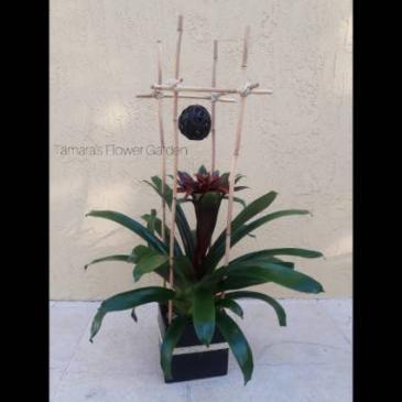 Structured Bromeliad