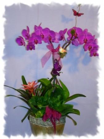 STUNNING PURPLE ORCHIDS PLANT