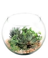 Stunning Succulent Bowl
