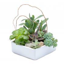 Stunning Succulent Garden Arrangement