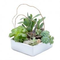 Stunning Succulent Garden Plant Arrangement