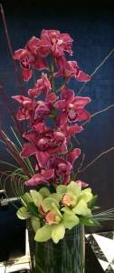 Stylish Orchids in Las Vegas Cymbidium Orchids