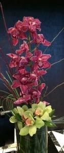 Stylish Orchids in Las Vegas Cymbidium Orchids