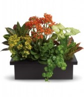 Stylish Plant Arrangement H1063A