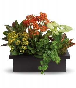 Stylish Plant Arrangement H1063A