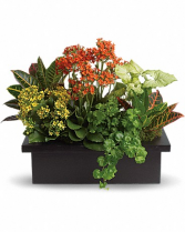 Stylish Planter (Container Varies)