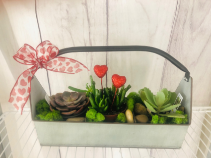 Succer for Love Succulents in trough