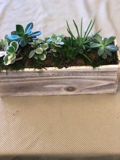Succuent Planter Planter Box