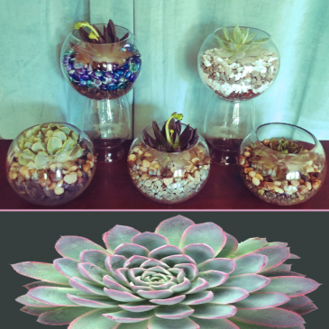 Succulant Bowl Plant