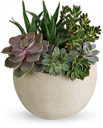 succulant dishgarden