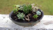 Succulant Garden  Ceramic Planter