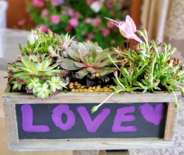 Succulants in Chalkboard Planter plants