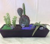 Succulent and cactus garden Succulent Plants