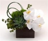Succulent and Phalaenopsis Box