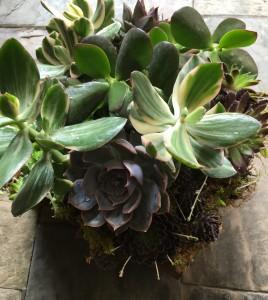 Woodland Succulent Planter