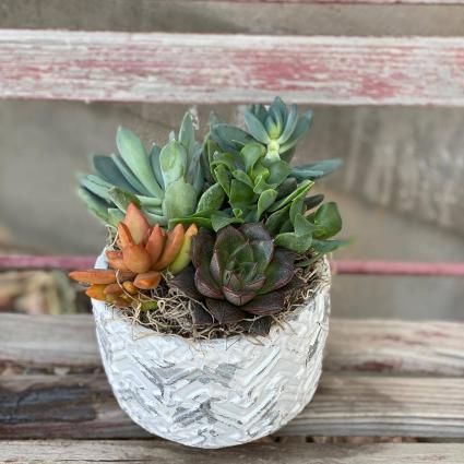 Succulent Arrangement Floral Design