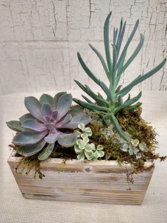 Succulent Arrangement- Think outside the box!
