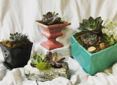 Succulent Assortments Call For Pricing