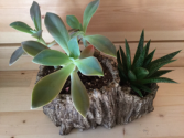 Succulent Birchwood Planter