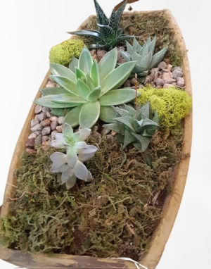 Succulent Boat  in Cambridge, ON | KELLY GREENS FLOWERS & GIFT SHOP
