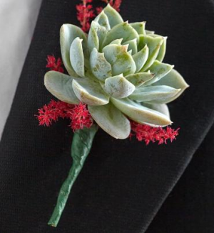 Succulent Boutonniere in Croton On Hudson, NY | Cooke's Little Shoppe Of Flowers