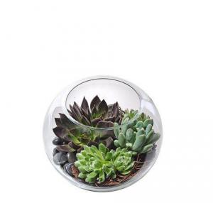 Succulent Bowl Arrangement Plant Arrangement in Richmond, VT | CRIMSON POPPY FLOWER SHOP
