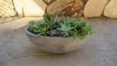 Succulent Bowl Potted