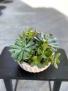 Succulent Bowl Plant